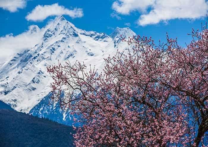 Peach Blossom and Mount Namcha Barwa