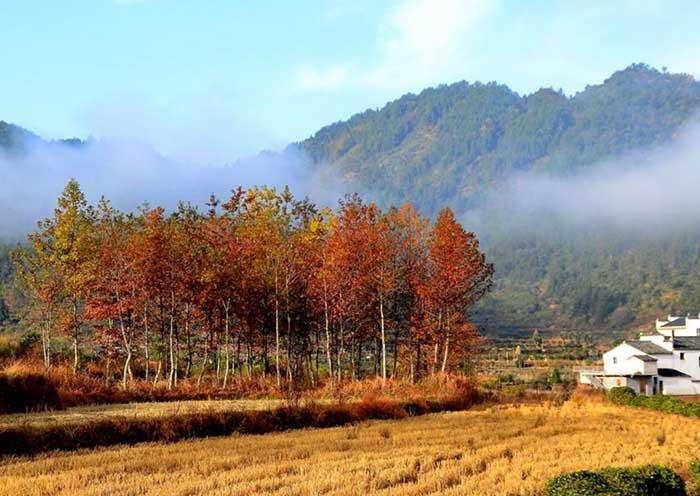 Wuyuan in Autumn